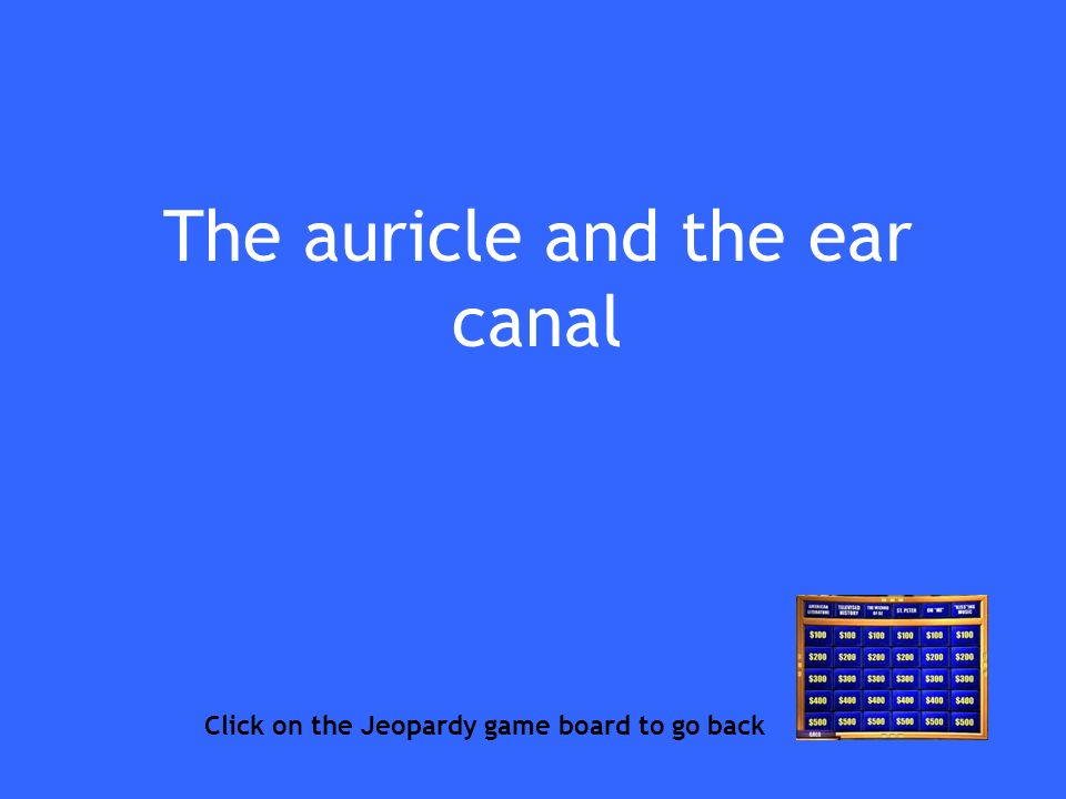 The auricle and the ear canal Click on the Jeopardy game board to go back
