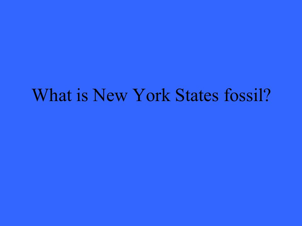What is New York States fossil