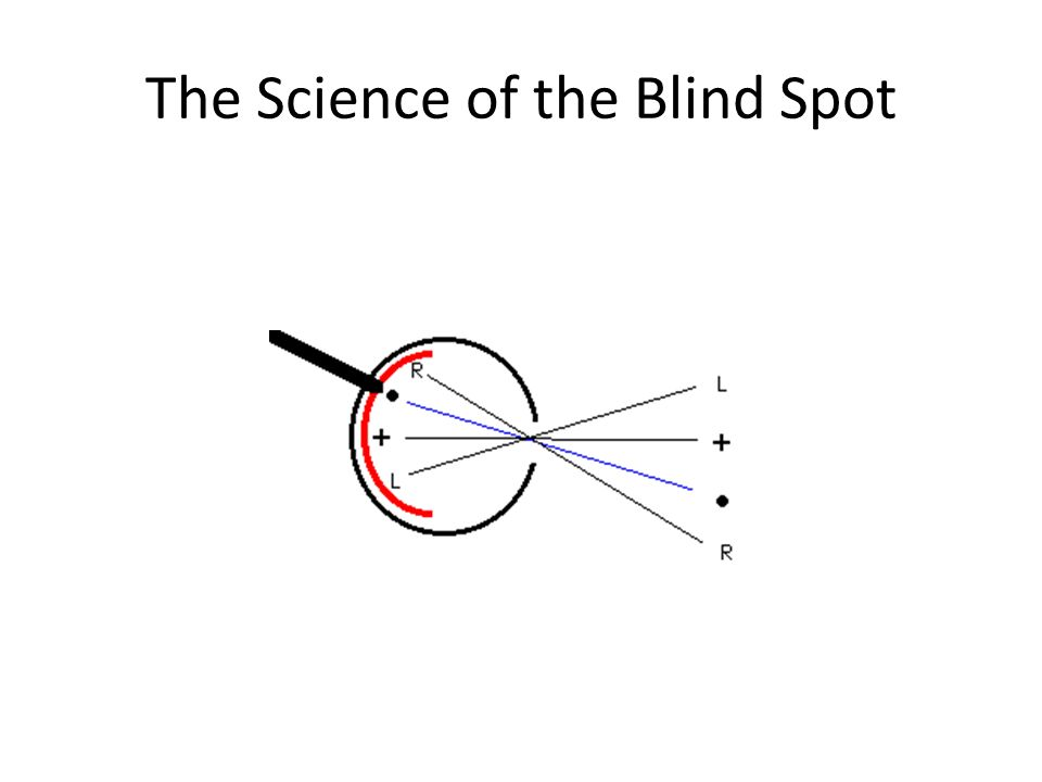 The Science of the Blind Spot