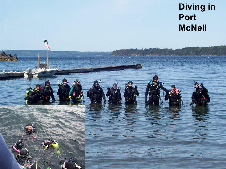 Diving in Port McNeil