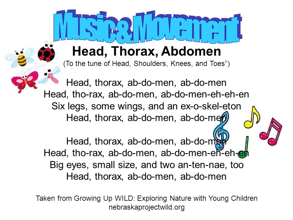 Head, Thorax, Abdomen (To the tune of Head, Shoulders, Knees, and Toes) Head, thorax, ab-do-men, ab-do-men Head, tho-rax, ab-do-men, ab-do-men-eh-eh-en Six legs, some wings, and an ex-o-skel-eton Head, thorax, ab-do-men, ab-do-men Head, tho-rax, ab-do-men, ab-do-men-eh-eh-en Big eyes, small size, and two an-ten-nae, too Head, thorax, ab-do-men, ab-do-men Taken from Growing Up WILD: Exploring Nature with Young Children nebraskaprojectwild.org