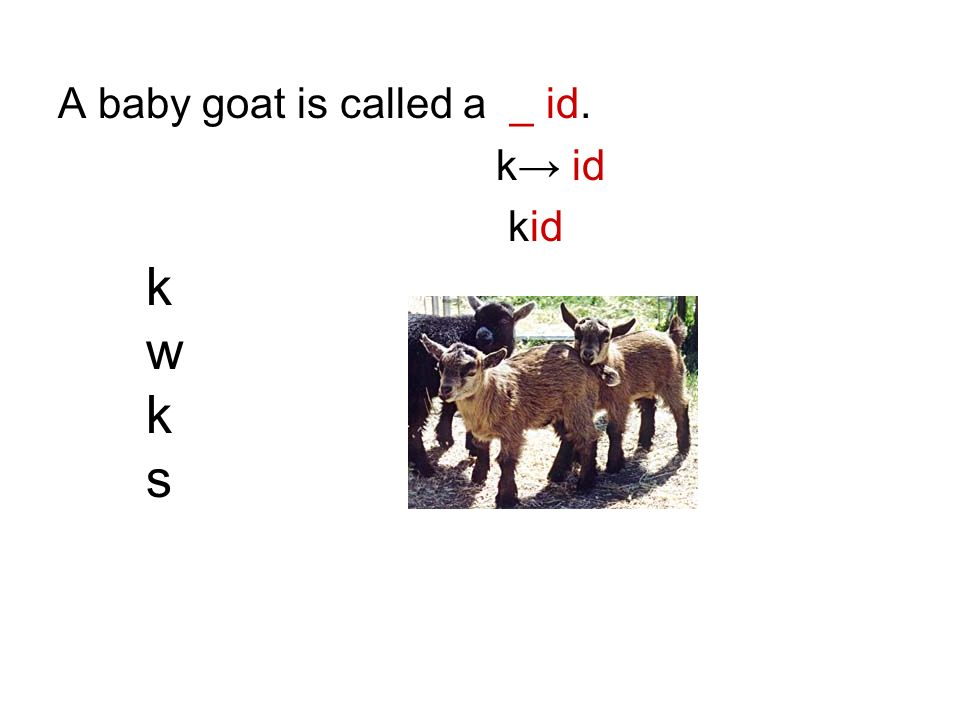 A baby goat is called a _ id. k id kwkskwks