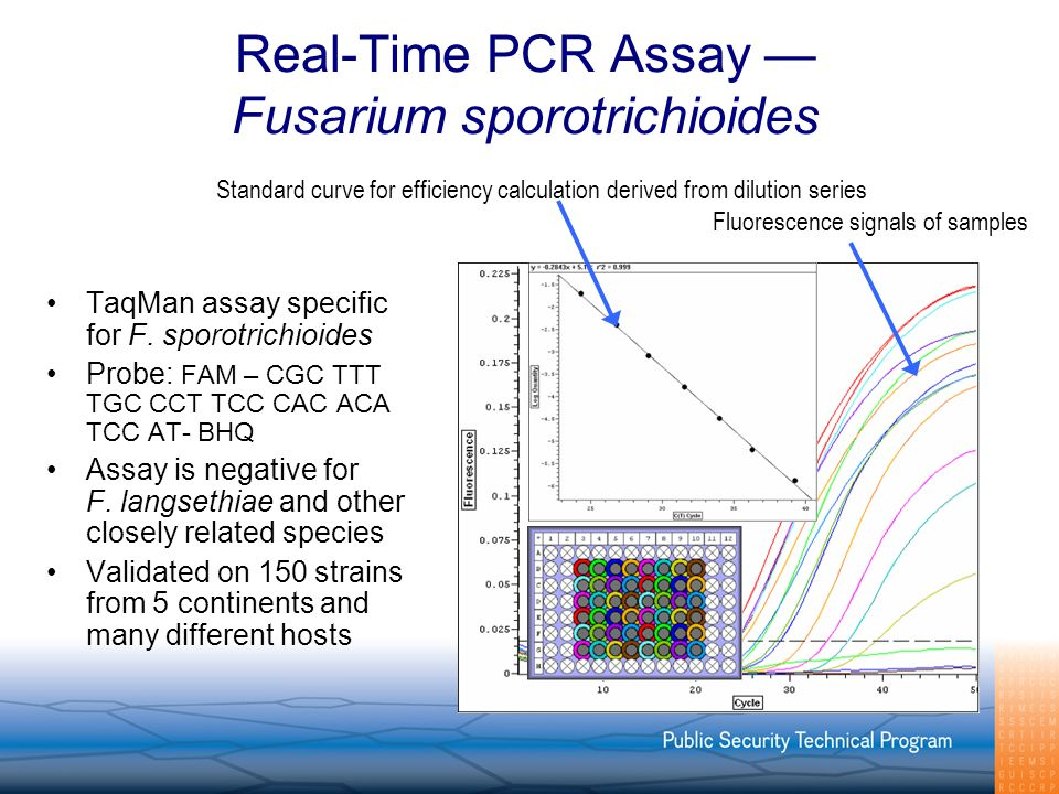 Real-Time PCR Assay Fusarium sporotrichioides TaqMan assay specific for F.