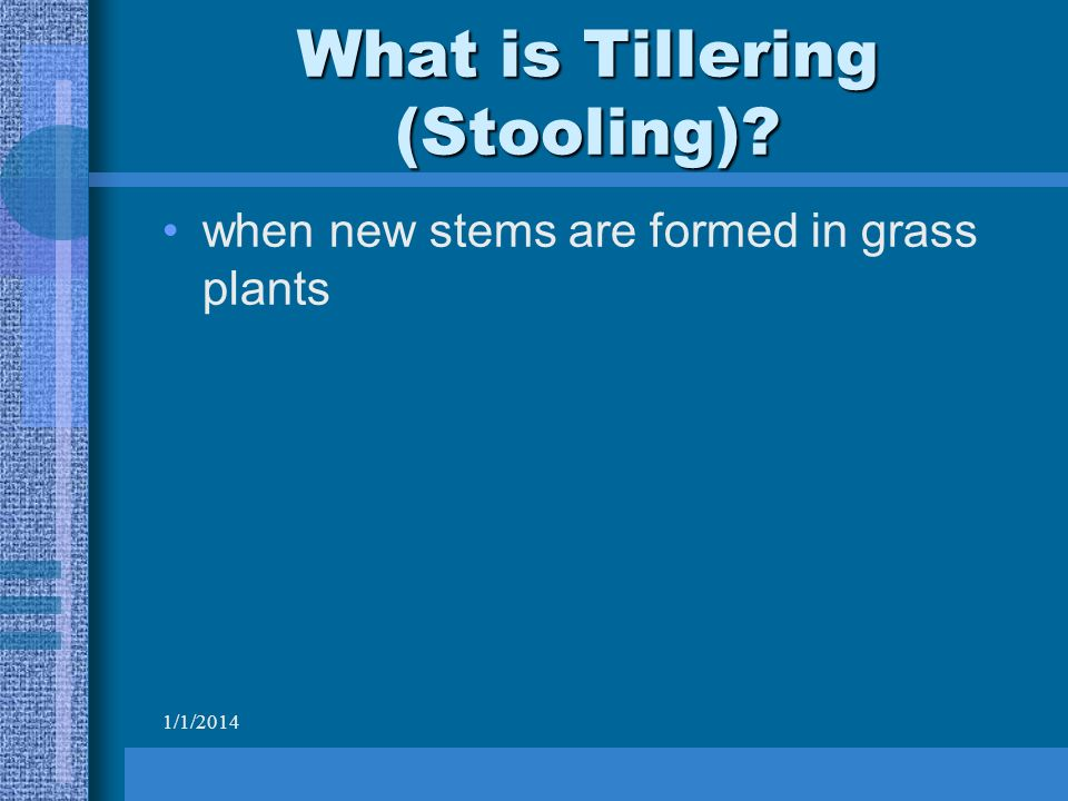 1/1/2014 What is Tillering (Stooling) when new stems are formed in grass plants