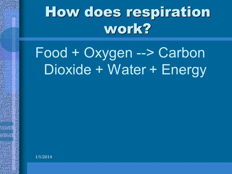 1/1/2014 How does respiration work Food + Oxygen --> Carbon Dioxide + Water + Energy
