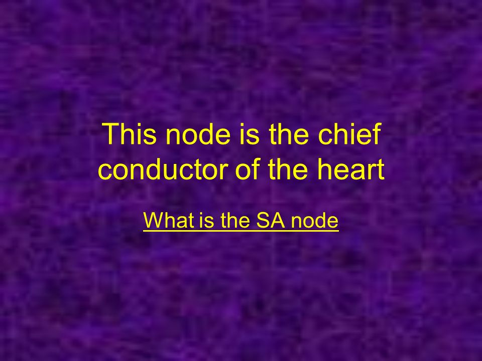 This node is the chief conductor of the heart What is the SA node