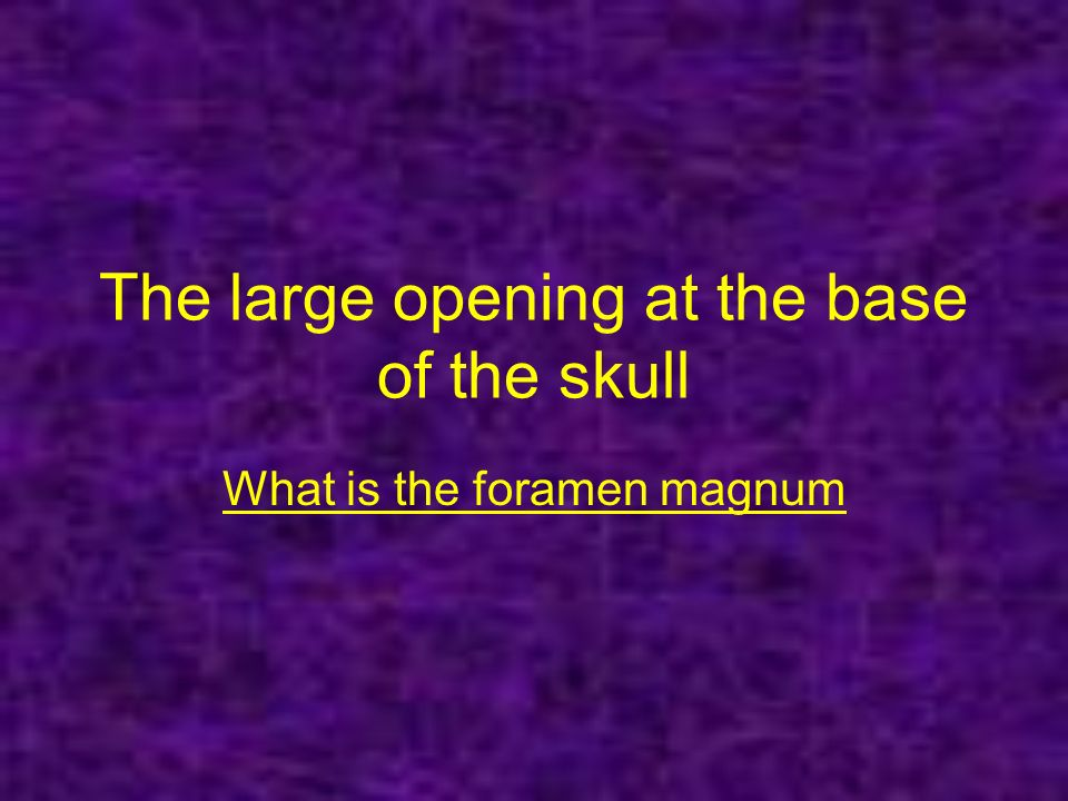 The large opening at the base of the skull What is the foramen magnum