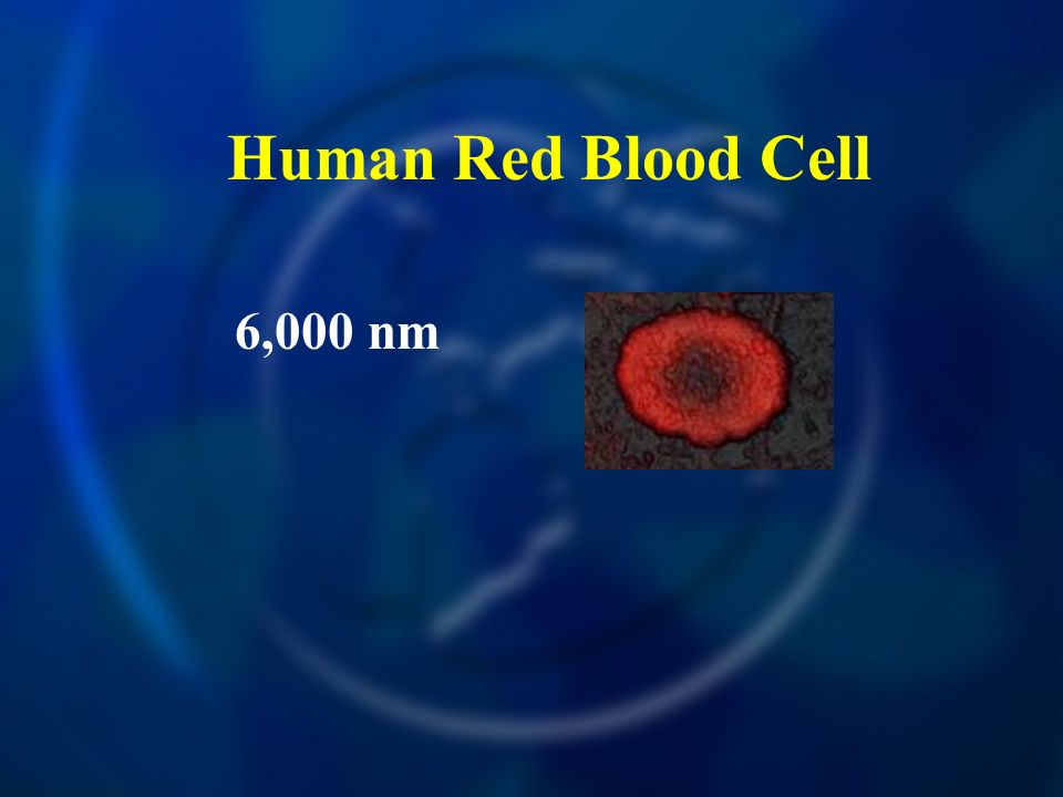 Human Red Blood Cell 6,000 nm
