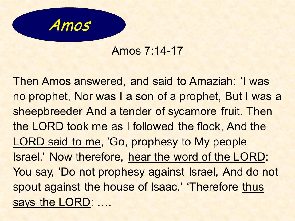 Amos 7:14-17 Then Amos answered, and said to Amaziah: I was no prophet, Nor was I a son of a prophet, But I was a sheepbreeder And a tender of sycamore fruit.