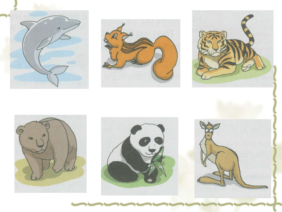 bear dolphin kangaroo giant panda squirrel tiger