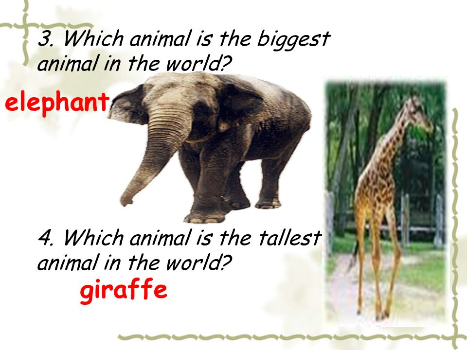Quiz about wild Animals 1. Which animal is the king in the forest.