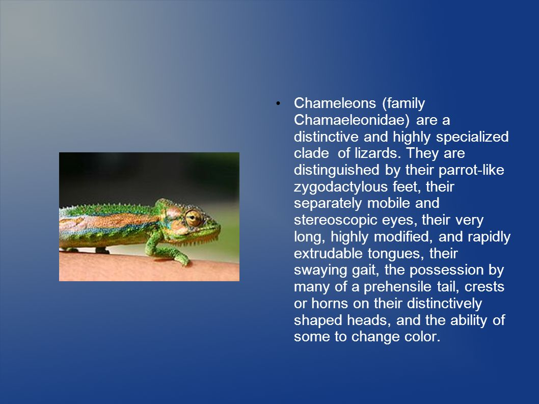 Chameleons (family Chamaeleonidae) are a distinctive and highly specialized clade of lizards.