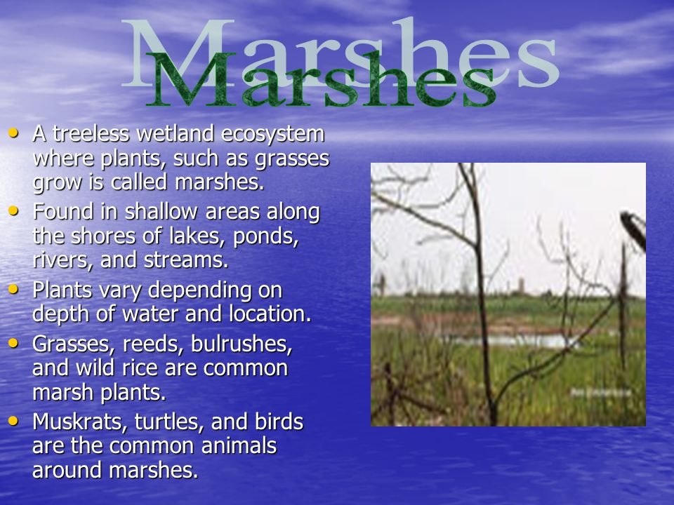 A treeless wetland ecosystem where plants, such as grasses grow is called marshes.