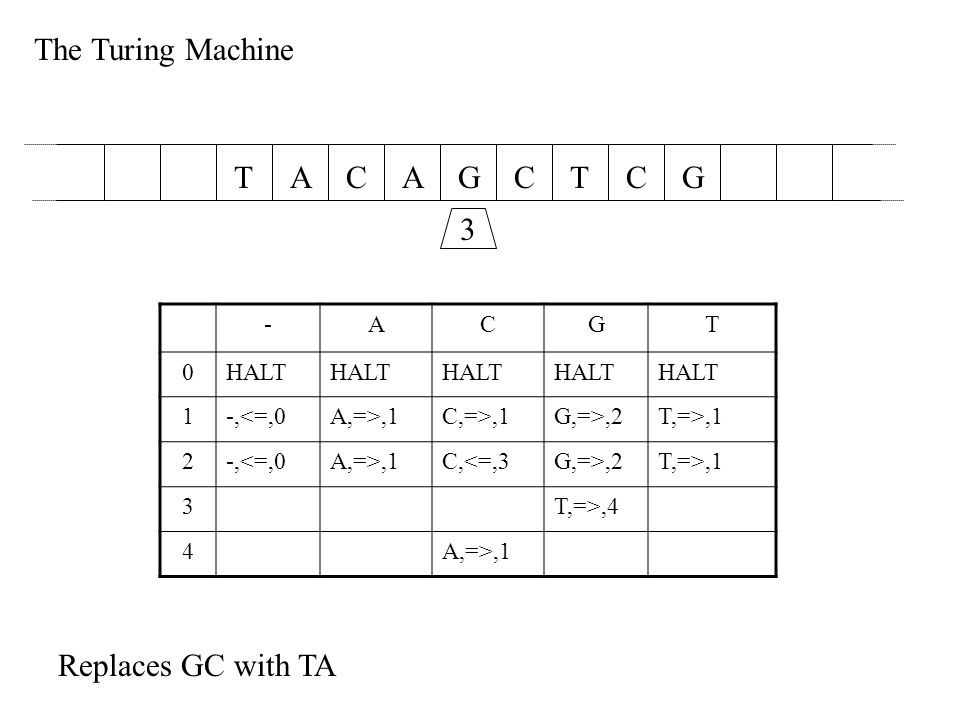 The Turing Machine AACGCTTGC 2 -ACGT 0HALT 1-,<=,0A,=>,1C,=>,1G,=>,2T,=>,1 2-,<=,0A,=>,1C,<=,3G,=>,2T,=>,1 3T,=>,4 4A,=>,1 Replaces GC with TA