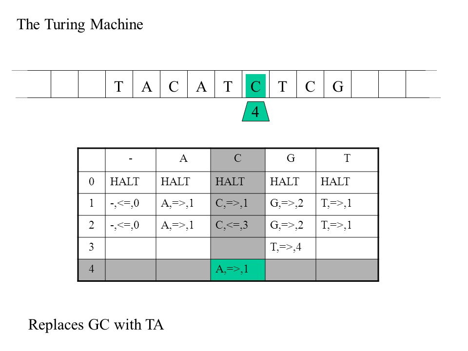 The Turing Machine AACTCTTGC 4 -ACGT 0HALT 1-,<=,0A,=>,1C,=>,1G,=>,2T,=>,1 2-,<=,0A,=>,1C,<=,3G,=>,2T,=>,1 3T,=>,4 4A,=>,1 Replaces GC with TA