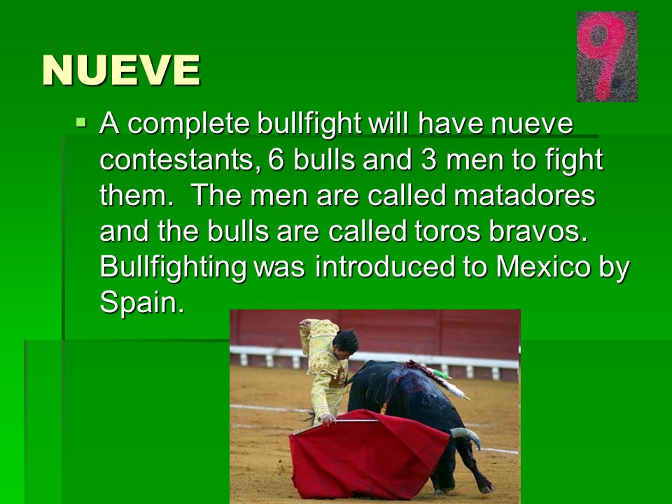 NUEVE A complete bullfight will have nueve contestants, 6 bulls and 3 men to fight them.