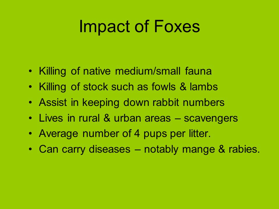 Impact of Foxes Killing of native medium/small fauna Killing of stock such as fowls & lambs Assist in keeping down rabbit numbers Lives in rural & urban areas – scavengers Average number of 4 pups per litter.