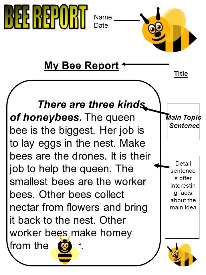 Name ______________ Date ________________ My Bee Report There are three kinds of honeybees.