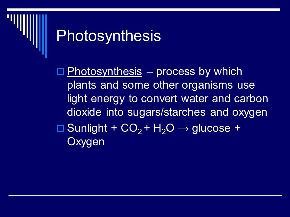 Photosynthesis Photosynthesis – process by which plants and some other organisms use light energy to convert water and carbon dioxide into sugars/starches and oxygen Sunlight + CO 2 + H 2 O glucose + Oxygen