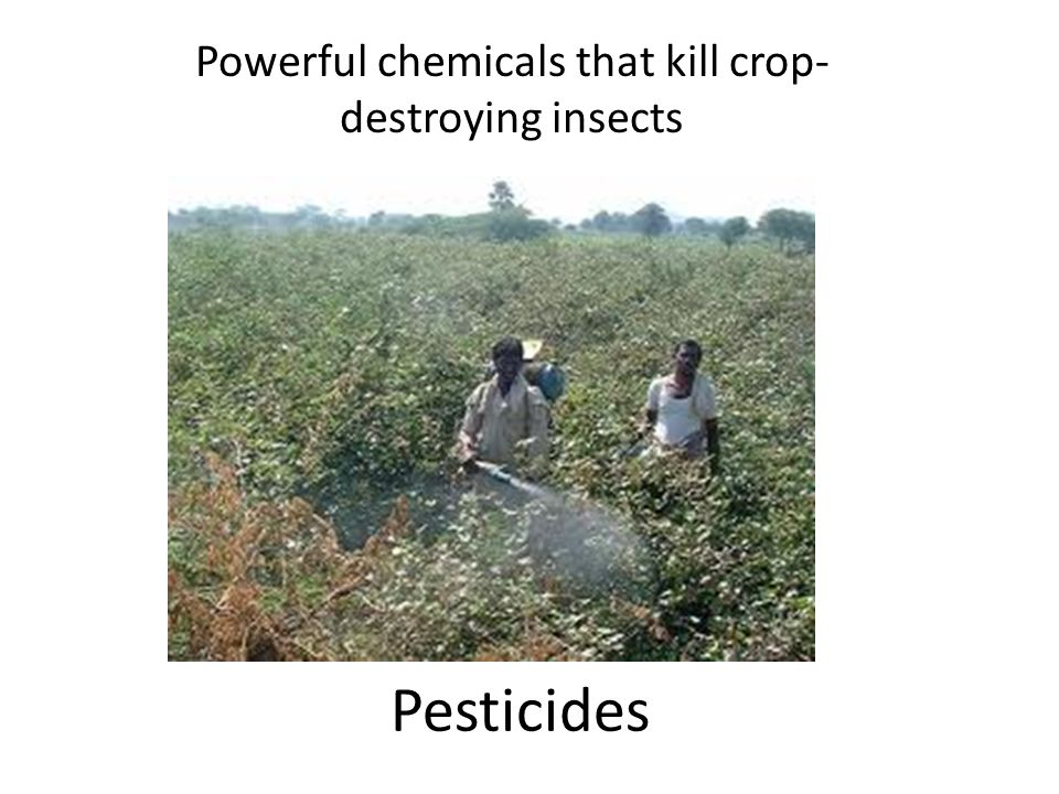 Pesticides Powerful chemicals that kill crop- destroying insects
