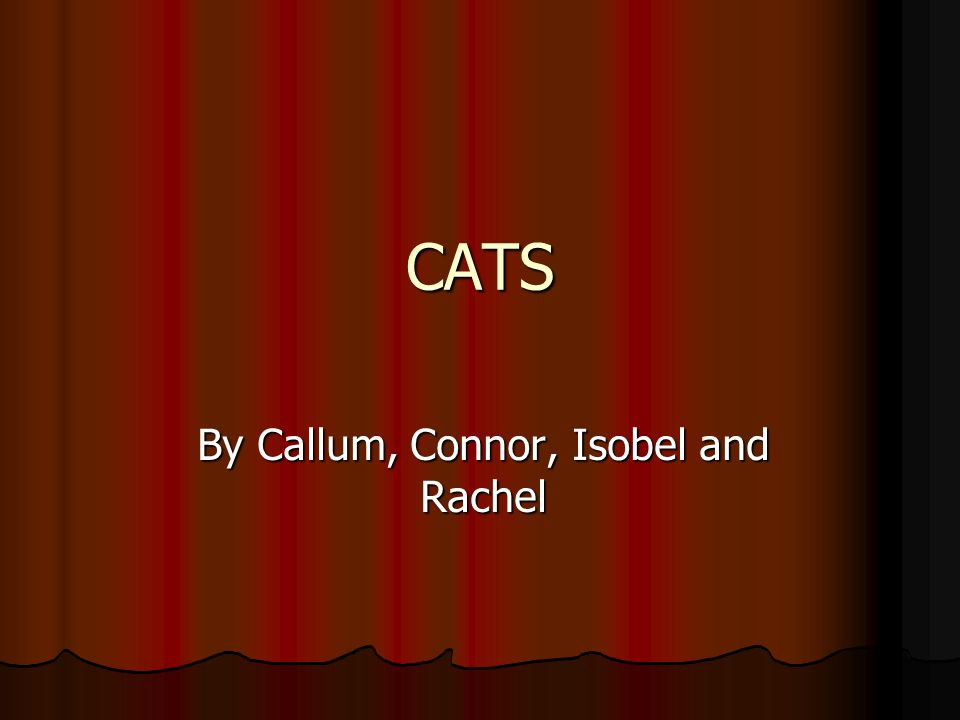 CATS By Callum, Connor, Isobel and Rachel