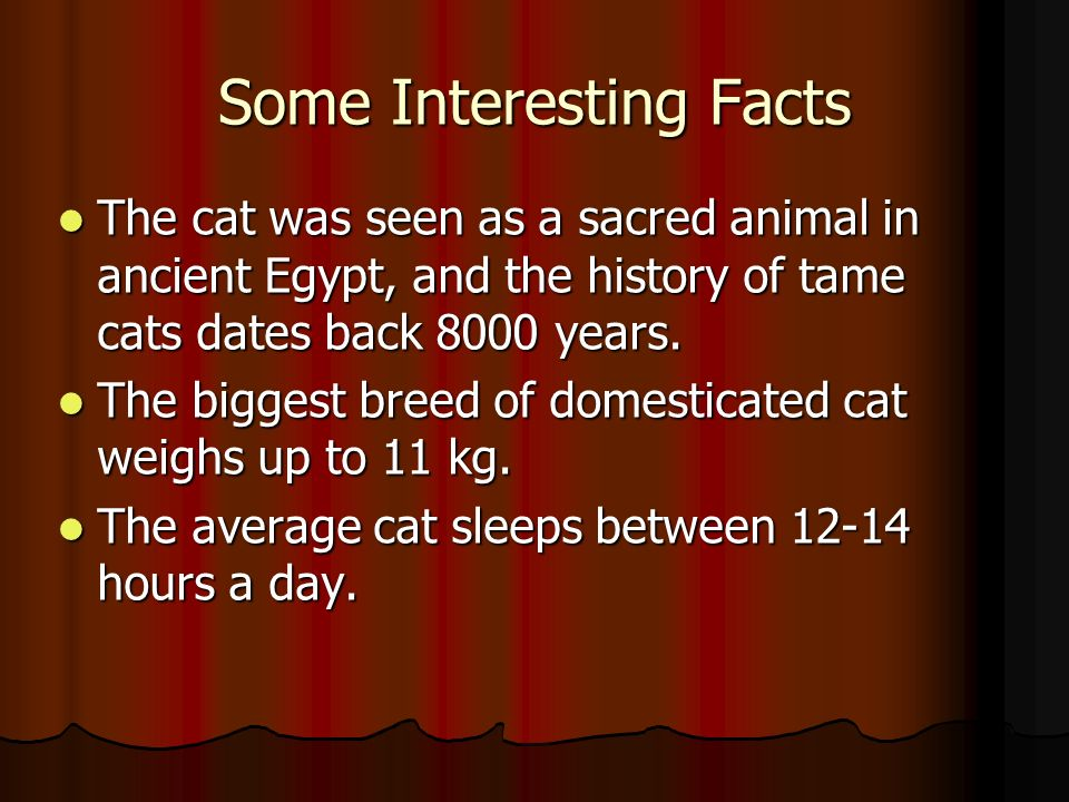 Some Interesting Facts The cat was seen as a sacred animal in ancient Egypt, and the history of tame cats dates back 8000 years.
