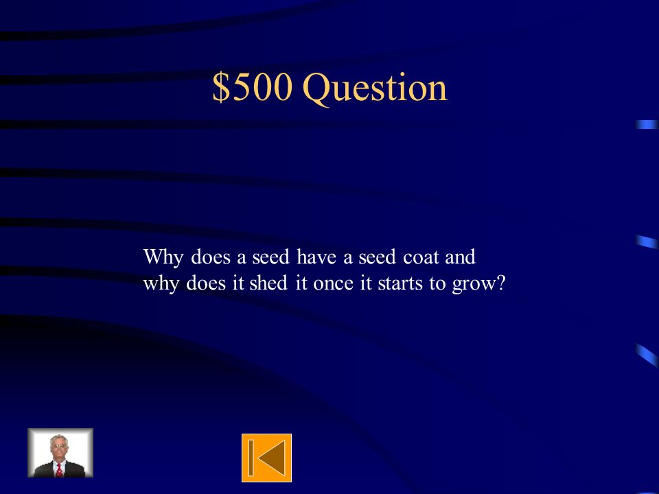 $400 Answer stores food to help grow