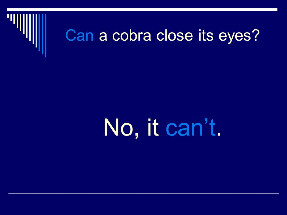 Can a cobra close its eyes No, it cant.