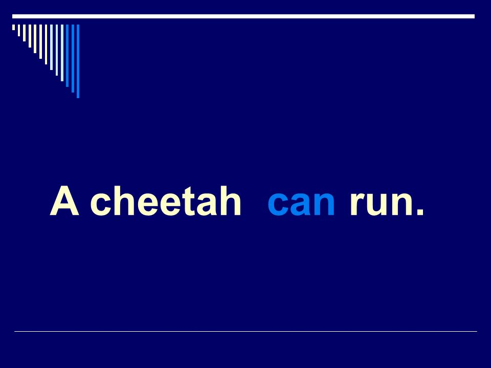 A cheetah can run.