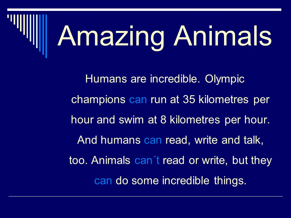 Amazing Animals Humans are incredible.