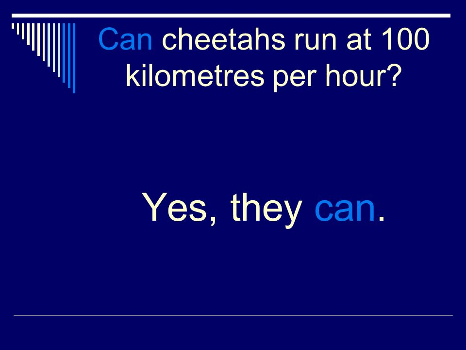 Can cheetahs run at 100 kilometres per hour Yes, they can.