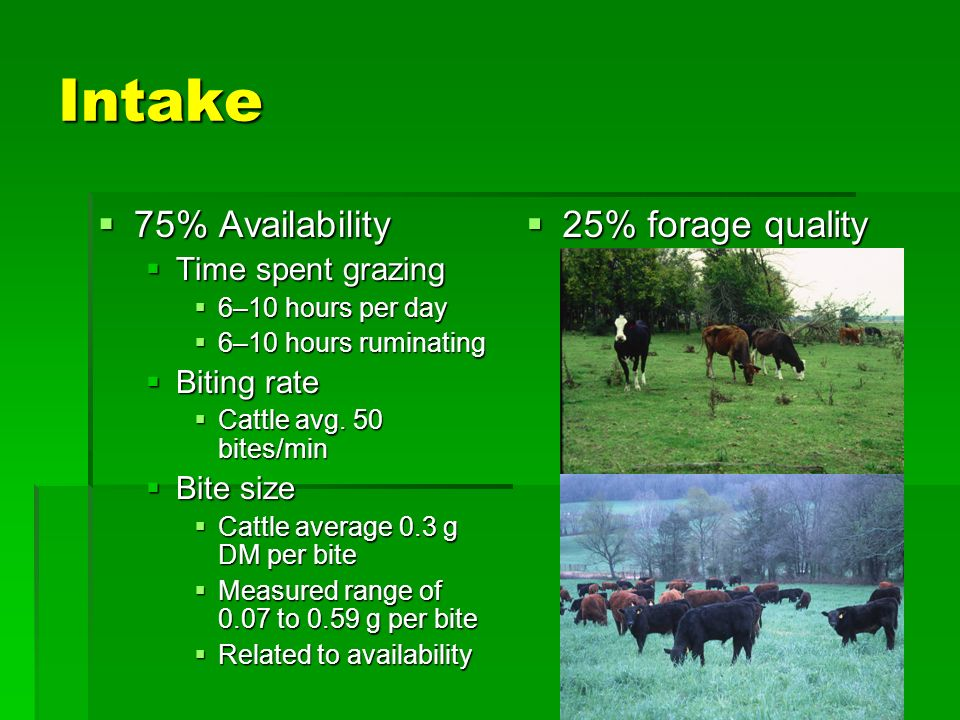 Intake 75% Availability 75% Availability Time spent grazing Time spent grazing 6–10 hours per day 6–10 hours per day 6–10 hours ruminating 6–10 hours ruminating Biting rate Biting rate Cattle avg.