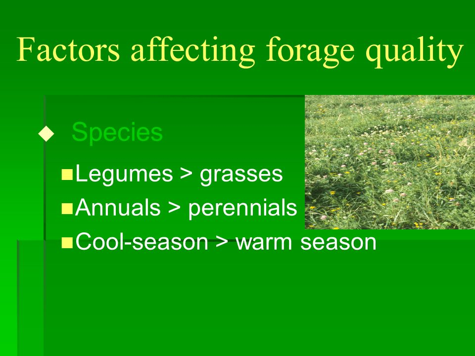 Factors affecting forage quality u Species n Legumes > grasses n Annuals > perennials n Cool-season > warm season