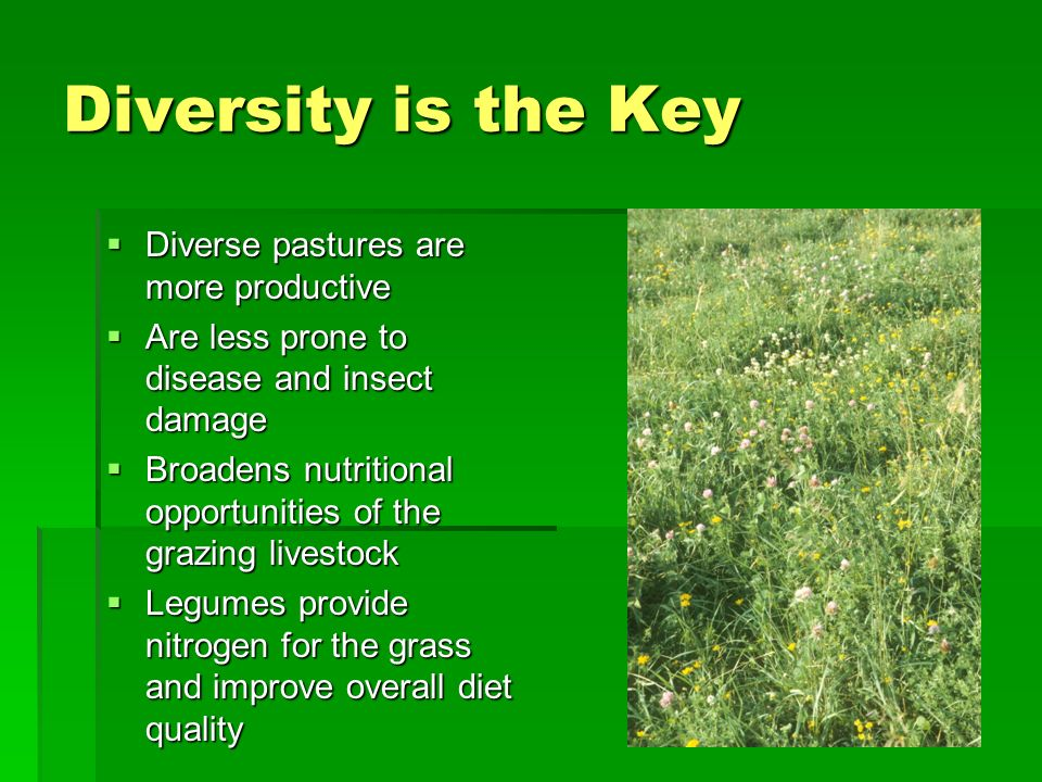 Diversity is the Key Diverse pastures are more productive Diverse pastures are more productive Are less prone to disease and insect damage Are less prone to disease and insect damage Broadens nutritional opportunities of the grazing livestock Broadens nutritional opportunities of the grazing livestock Legumes provide nitrogen for the grass and improve overall diet quality Legumes provide nitrogen for the grass and improve overall diet quality