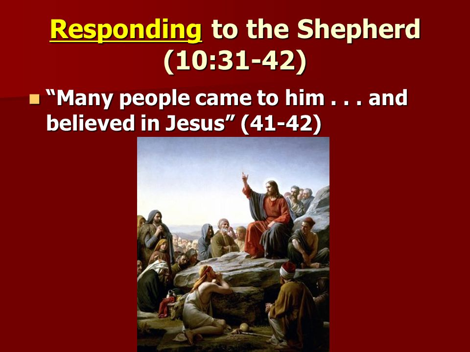 Responding to the Shepherd (10:31-42) Many people came to him...