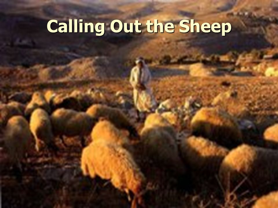 Calling Out the Sheep
