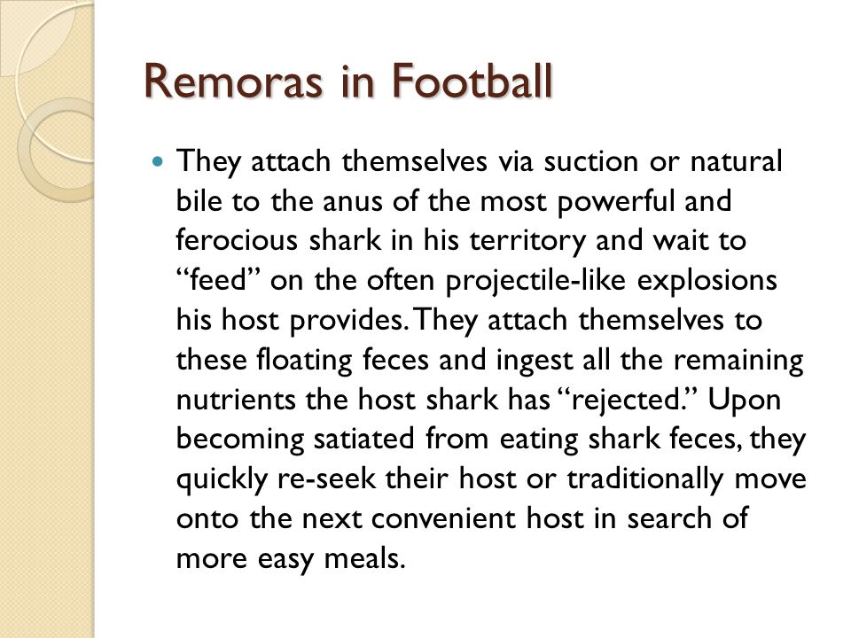 Remoras in Football They attach themselves via suction or natural bile to the anus of the most powerful and ferocious shark in his territory and wait to feed on the often projectile-like explosions his host provides.