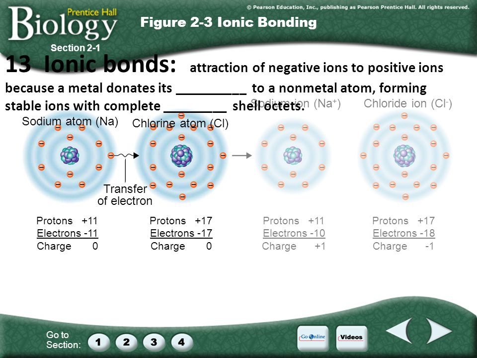 Go to Section: Sodium atom (Na) Chlorine atom (Cl) Sodium ion (Na + )Chloride ion (Cl - ) Transfer of electron Protons +11 Electrons -11 Charge 0 Protons +17 Electrons -17 Charge 0 Protons +11 Electrons -10 Charge +1 Protons +17 Electrons -18 Charge -1 Section 2-1 Figure 2-3 Ionic Bonding 13 Ionic bonds: attraction of negative ions to positive ions because a metal donates its __________ to a nonmetal atom, forming stable ions with complete _________ shell octets.