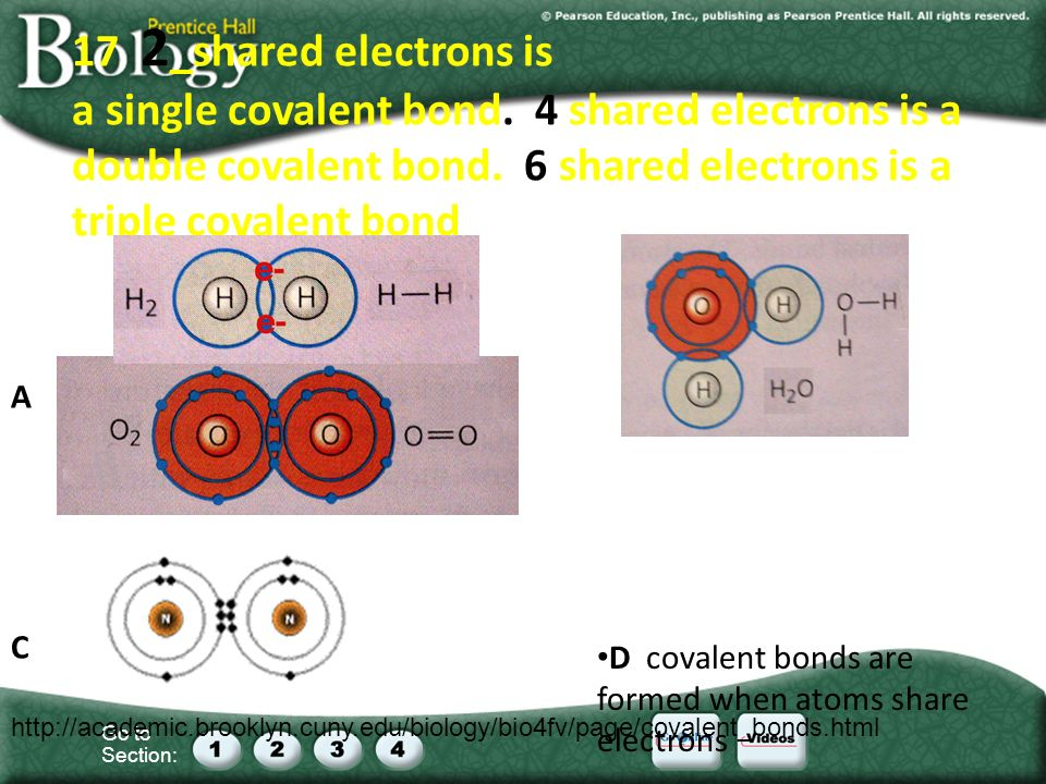 Go to Section: 17 2 _shared electrons is a single covalent bond.