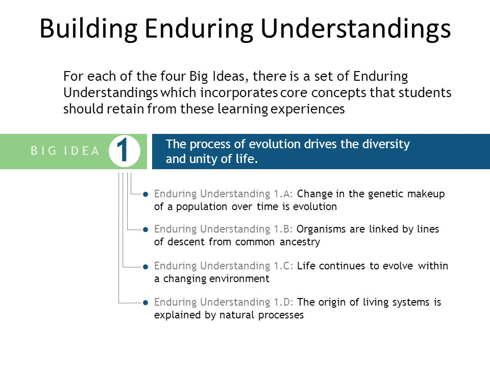 Building Enduring Understandings For each of the four Big Ideas, there is a set of Enduring Understandings which incorporates core concepts that students should retain from these learning experiences E X A M P L E The process of evolution drives the diversity and unity of life.