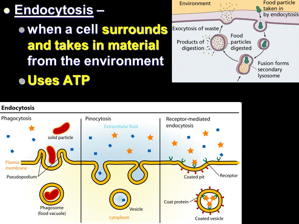 Endocytosis – Endocytosis – when a cell surrounds and takes in material from the environment when a cell surrounds and takes in material from the environment Uses ATP Uses ATP