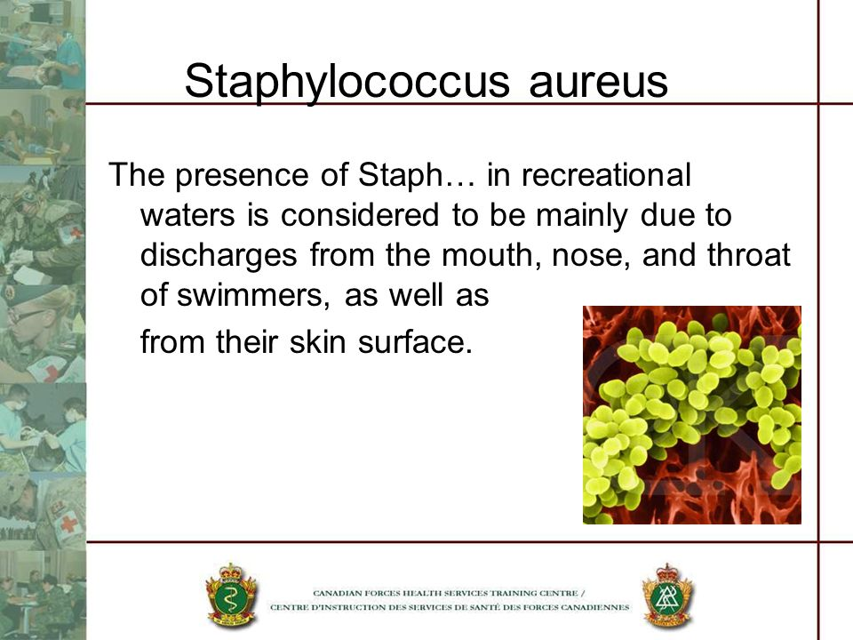 Staphylococcus aureus The presence of Staph… in recreational waters is considered to be mainly due to discharges from the mouth, nose, and throat of swimmers, as well as from their skin surface.