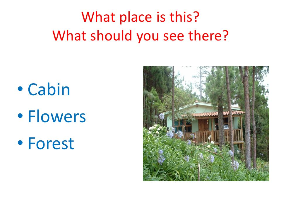 What place is this What should you see there Cabin Flowers Forest