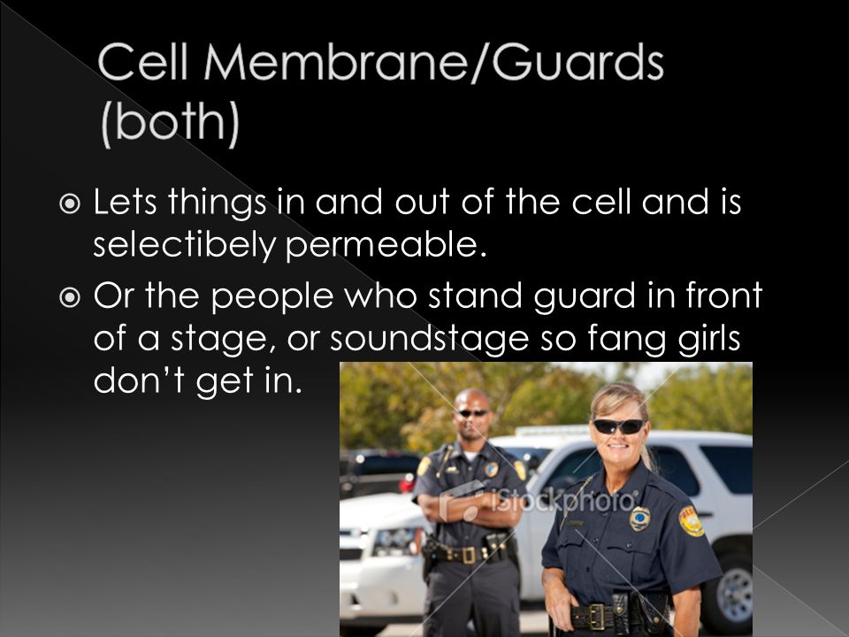 Lets things in and out of the cell and is selectibely permeable.