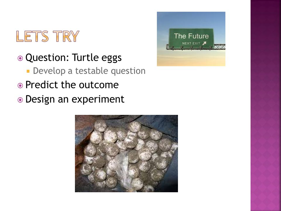 Question: Turtle eggs Develop a testable question Predict the outcome Design an experiment