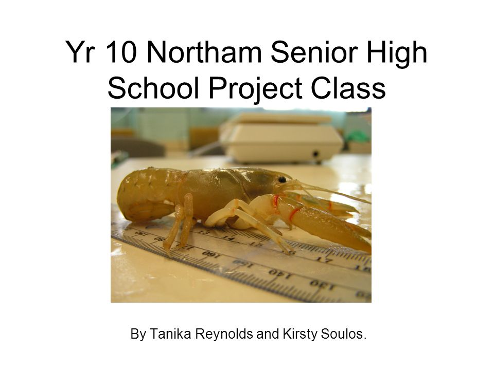 Yr 10 Northam Senior High School Project Class By Tanika Reynolds and Kirsty Soulos.