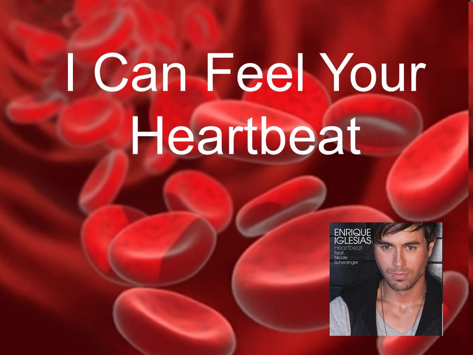 I Can Feel Your Heartbeat The Circulatory System I Can Feel Your Heartbeat