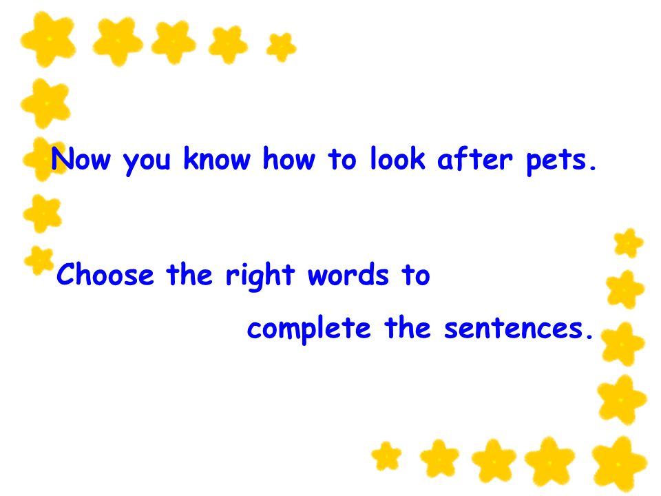 Now you know how to look after pets. Choose the right words to complete the sentences.