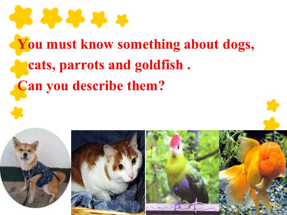 You must know something about dogs, cats, parrots and goldfish. Can you describe them