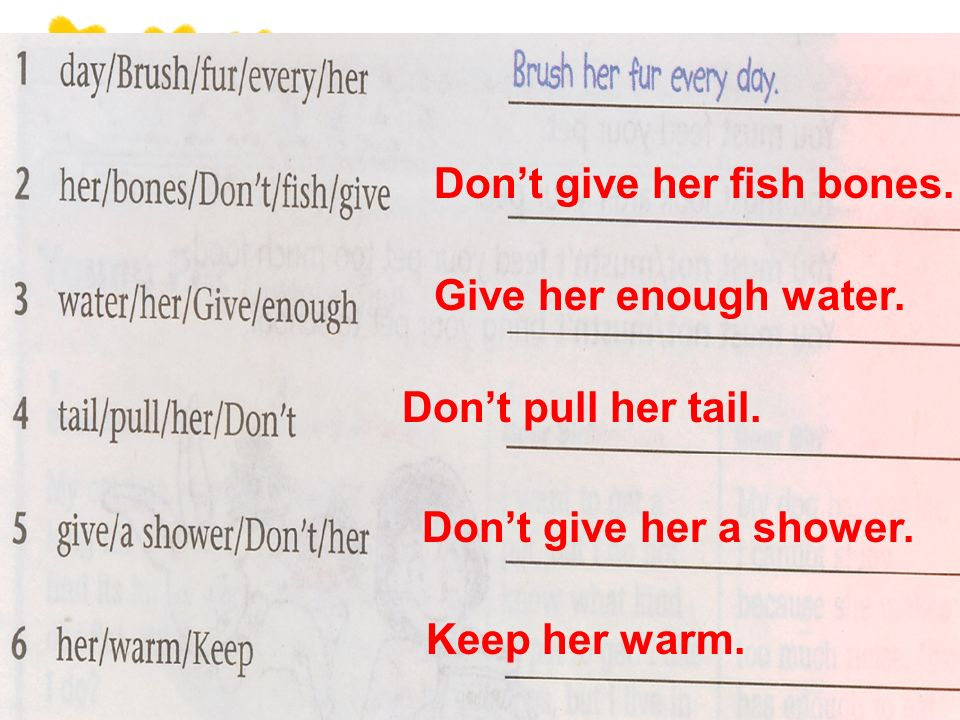 Dont give her fish bones. Give her enough water. Dont pull her tail.